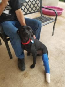 Heart of Texas Lab Rescue